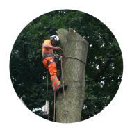 Tree Removal Wakefield