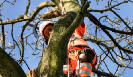 Commercial Tree Pruning